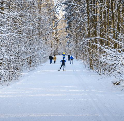 5 советов новичкам на беговых лыжах